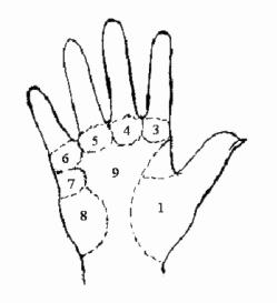 Gò lòng bàn tay